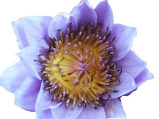 Fleur mystere_09