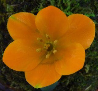 Fleur-mystere-19b