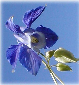 Fleur-mystere-23