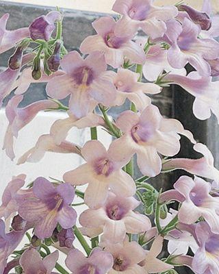 Fleur-24
