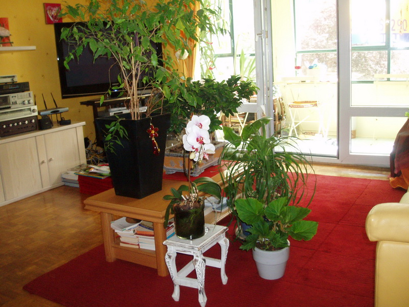 Plantes_vacances