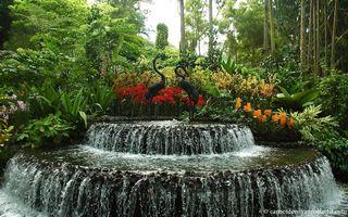 Le jardin des Orchidées de Singapour - Le pouvoir des fleurs