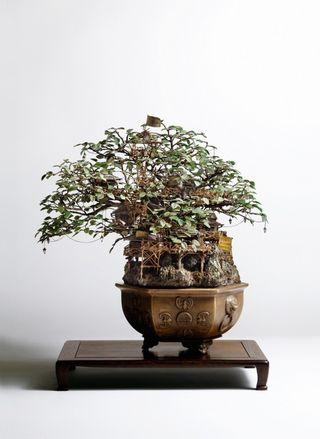 Bonsai-03