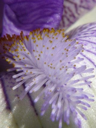 Fleur-mystere-14