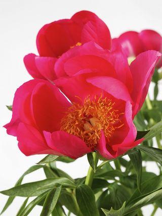 Fleur-mystere-15b