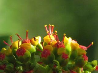 Fleur mystere 21b