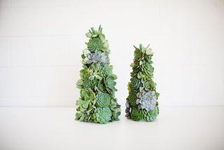 Mariage-plantes-succulentes_02