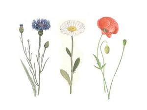 Pouvoir_des_fleurs__14juillet