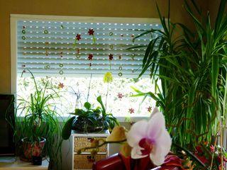 Plantes-appartement