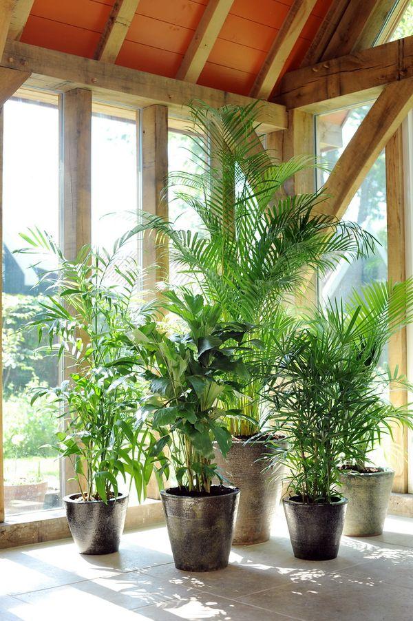 Le palmier plante d 39 t le pouvoir des fleurs for La maison du palmier