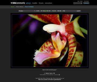 Macro-orchidées_02