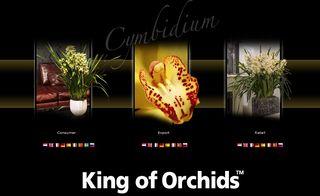 Orchidée-cymbidium_03