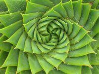 Plante-grasse