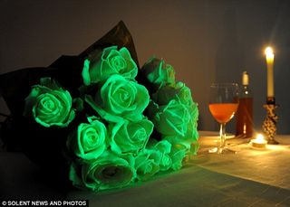Roses lumineuses_01