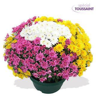 Quelle Plante Pour Le Cimetiere Le Pouvoir Des Fleurs