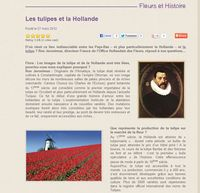 Interflora-tulipes_01