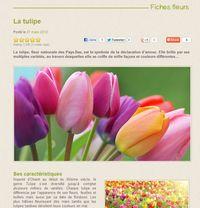 Interflora-tulipes_02