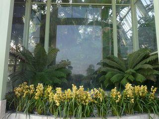 1001 orchidées_01