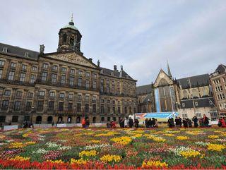 Tulipes-amsterdam