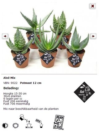 L 39 alo v ra plante miracle le pouvoir des fleurs - Ou trouver de l aloe vera en plante ...
