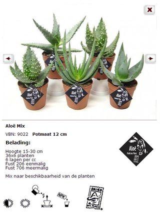 Aloe-plante_mixtes