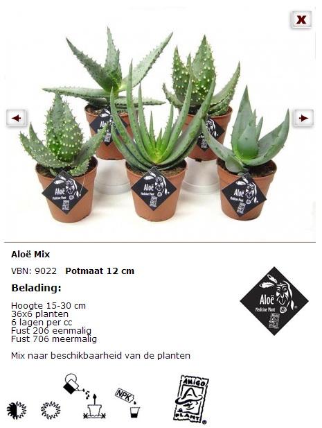 l 39 alo v ra plante miracle le pouvoir des fleurs. Black Bedroom Furniture Sets. Home Design Ideas