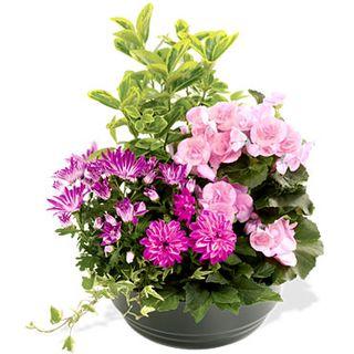 Interflora_coupe-de-plantes