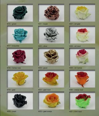 Roses_cirées 3
