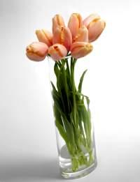 Tulipe-menton