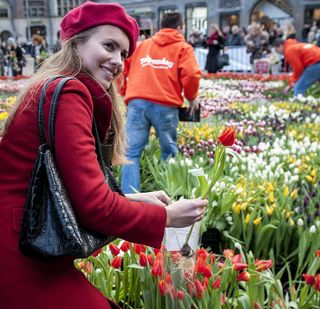 Tulipe-cueillette