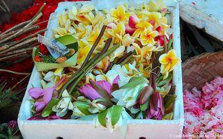 Carnet-voyage-frangipanier-et-lotus