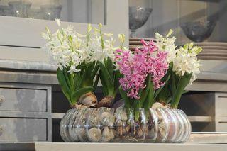 Nouveau La Jacinthe Multiflora Le Pouvoir Des Fleurs