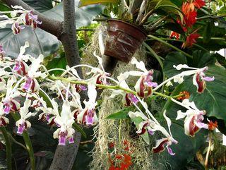 1001 orchidées_02