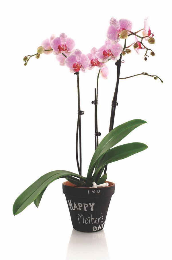 astuce pour maman un cadeau personnalis avec une orchid e phalaenopsis le pouvoir des fleurs. Black Bedroom Furniture Sets. Home Design Ideas
