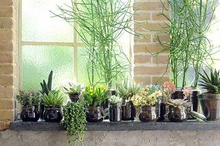 06_Succulentes.3