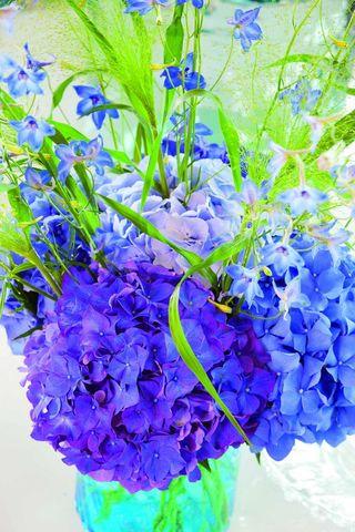 Hortensia bleu 1