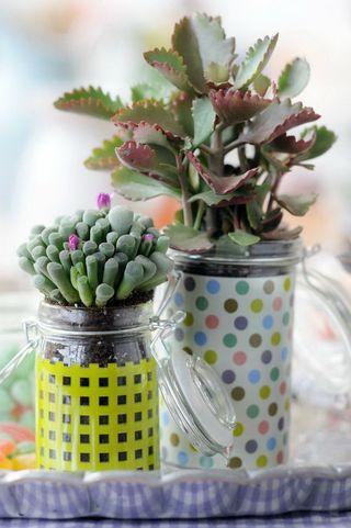 06_Succulentes.7
