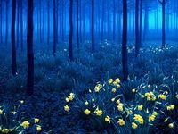 A-La Forêt-Noire (Schwarzwald), Allemagne