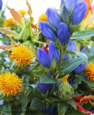 Fleurs-été-3