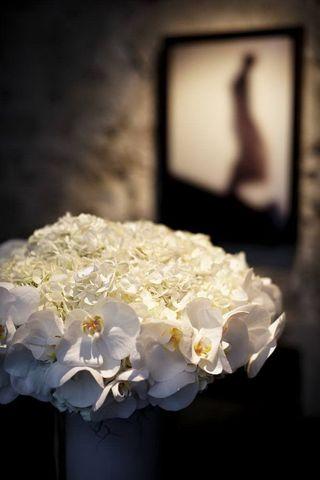 Hortensia blanc_01