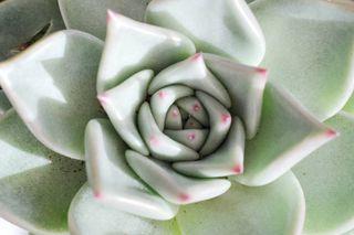 06_Succulentes.1b