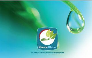 Plante-bleue