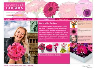 Colouredbygerbera