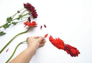 Redhongyi-création cardinal