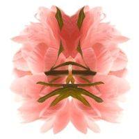 Miroir vegetal_pivoine
