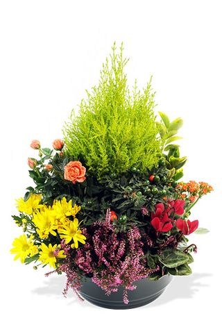 Interflora-coupe de plantes