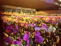 Noel-plantes-orchidées_02