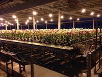 Noel-plantes-orchidées