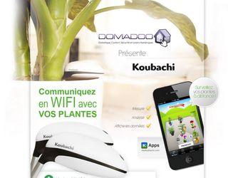 Plantes-koubachi