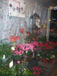 Noel-art floral Grasse